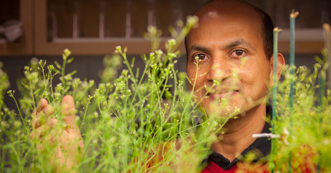 Venugopal Mendu gazing through plant leaves