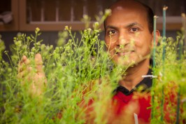 Venugopal Mendu gazing through plant leaves